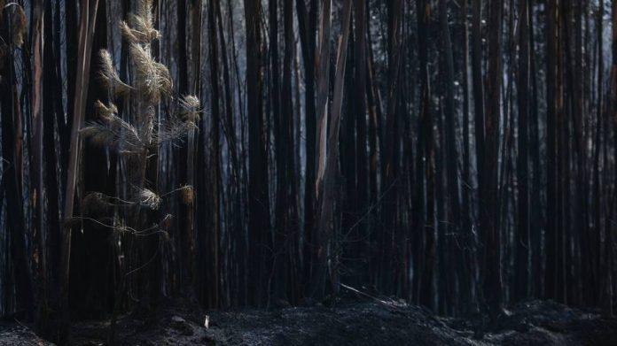 Fotografia bosque quemado.